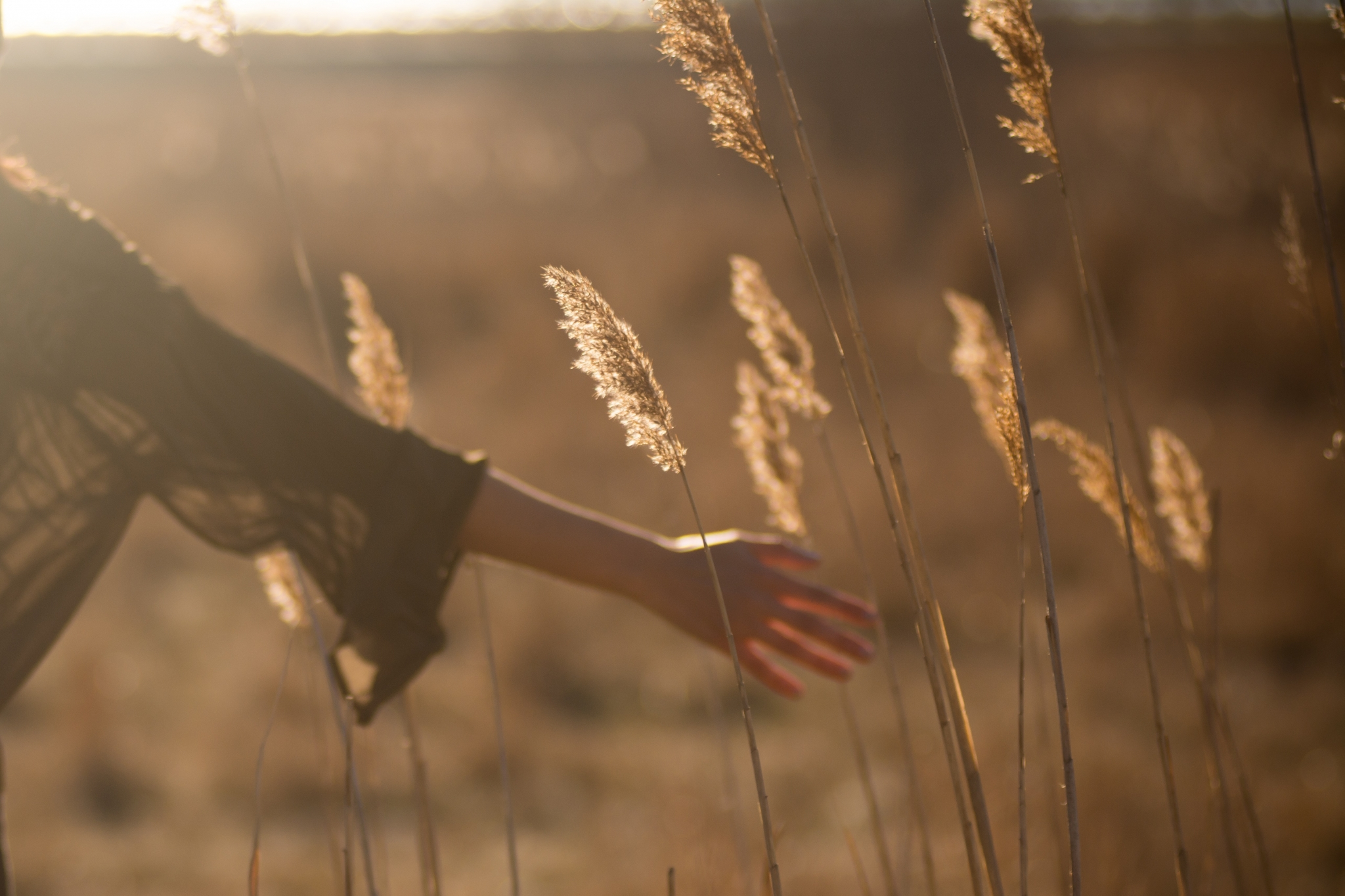 oliver pacas hand in wheat field