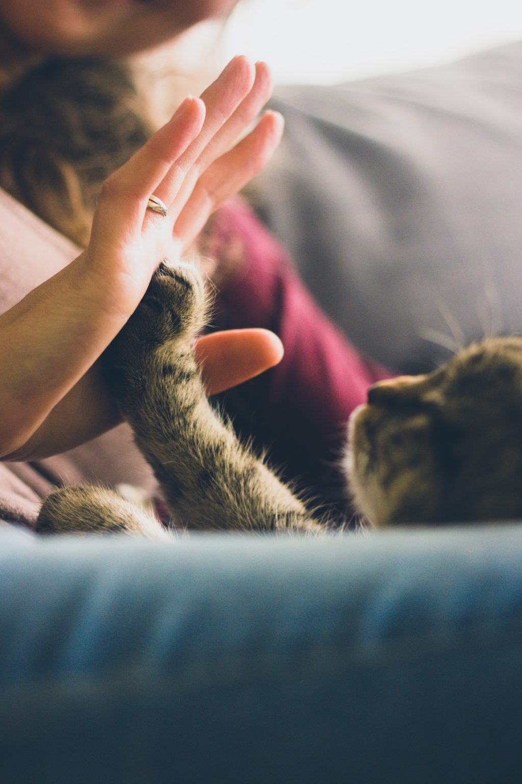 Declining Suicide Rates, Happy Cats, and More Good News to Start the Day